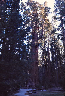 California   -   Sequoia National Park   -   May 1976