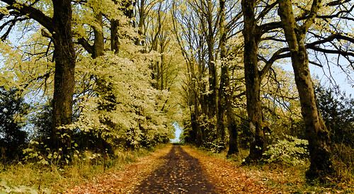 road autumn ireland tree landscape flickr best ie 2c kildare donadea 72dpipreview ©lowresolutionpreview ©2c
