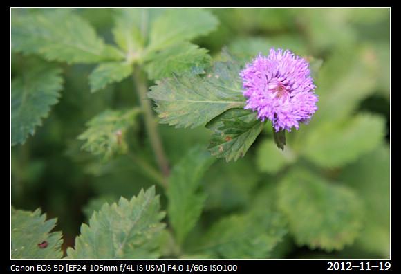 20121119_Flower46