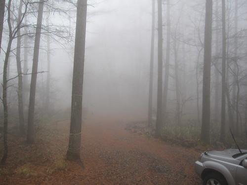 だんだん霧が濃くなります・・2012.11.23 by Poran111