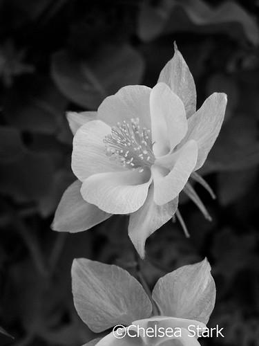 Flower ©ChelseaStark http://www.chelseastarkphotography.com by chelseastarkphotography.com