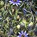 Small photo of Floras, Aldan