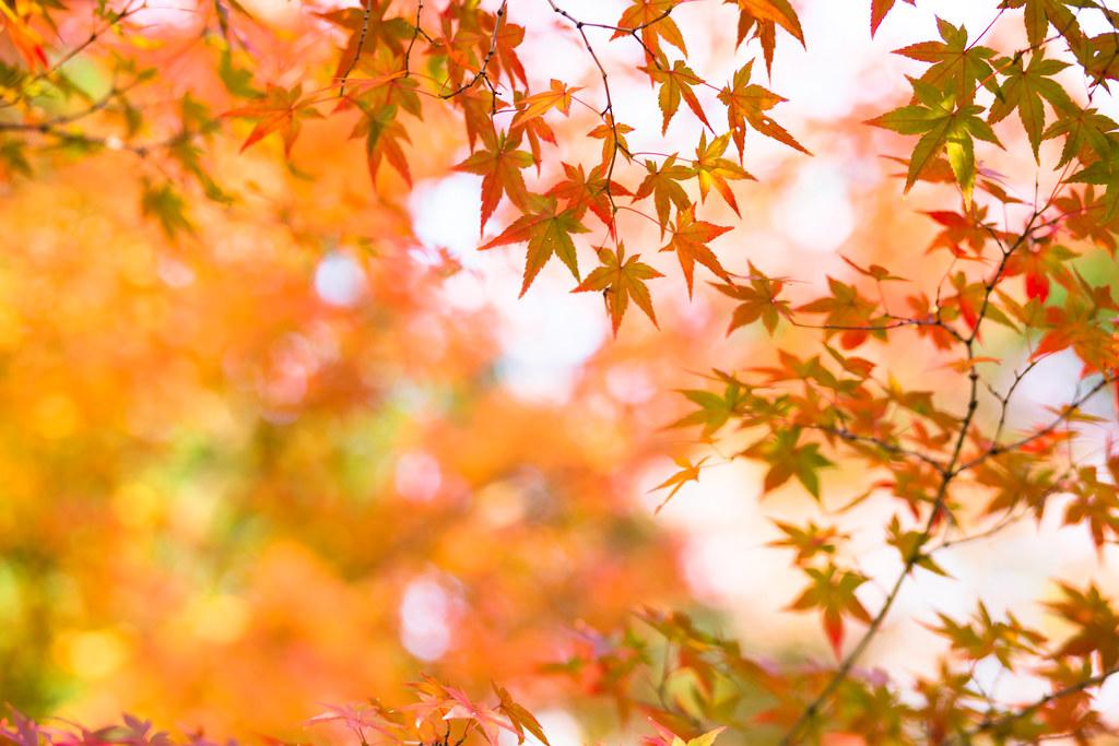 Kyoto-shi, Kyoto Prefecture, Japan, 0.01 sec (1/100), f/2.8, 85 mm, EF85mm f/1.8 USM