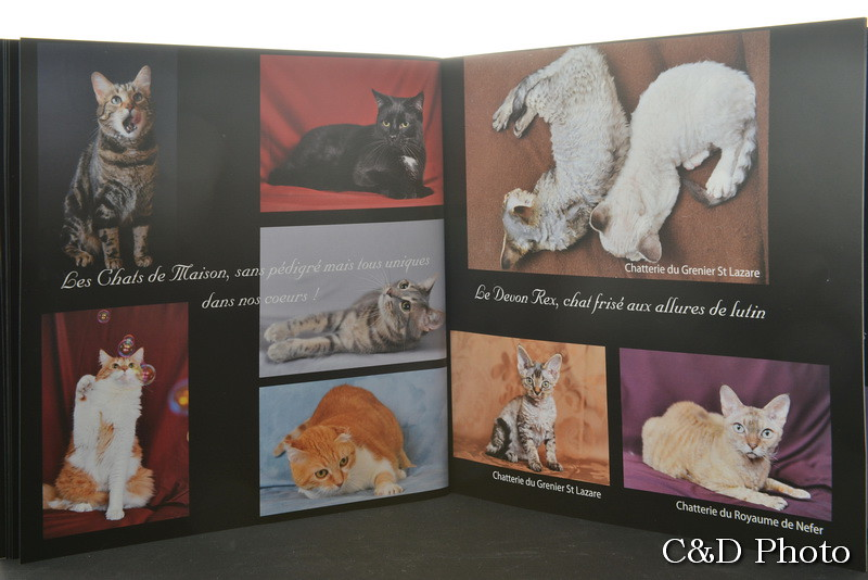Chats de maison et chats Devon Rex du livre photos sur les Chats de Race de Cnd photo