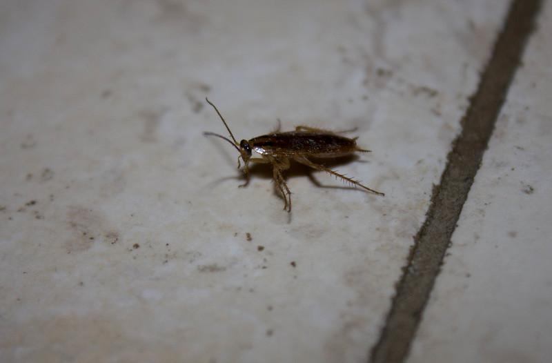Тараканы перестали быть сладкоешками