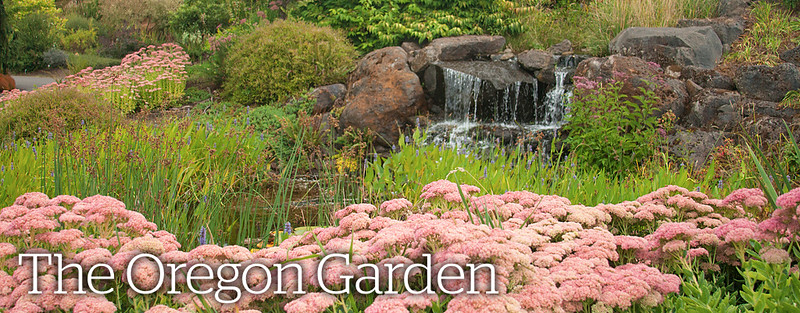 Rhone Street Gardens: A Visit to The Oregon Garden