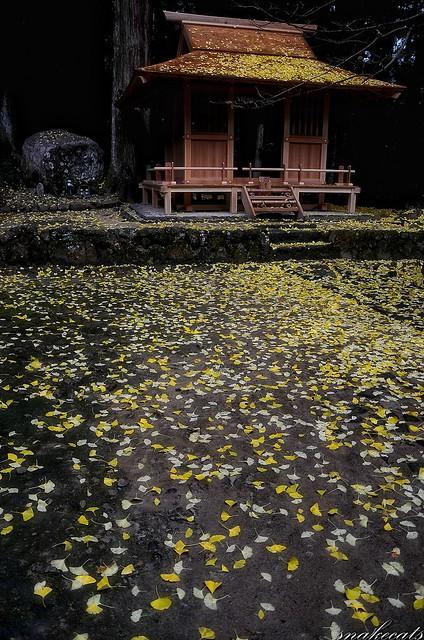 「覆う」 室生寺 - 奈良