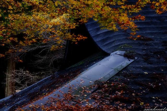 「散りゆく」 室生寺 - 奈良