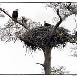 Eagles+Nest+2