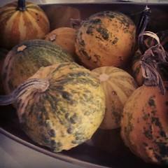 vegetable(1.0), pumpkin(1.0), produce(1.0), food(1.0), winter squash(1.0), still life photography(1.0), still life(1.0), cucurbita(1.0), gourd(1.0),