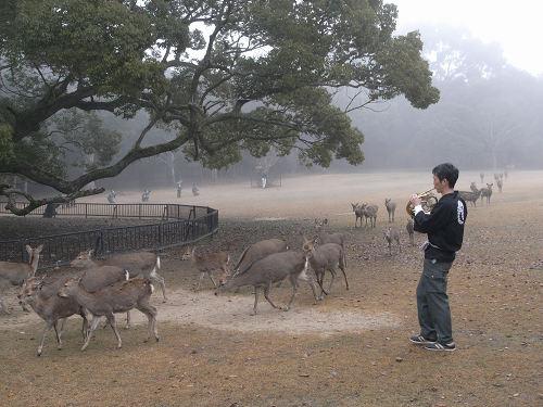 鹿寄せ@奈良公園(飛火野)-04