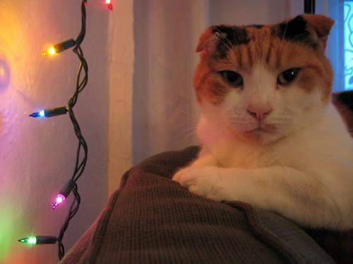 Viv's Christmas face