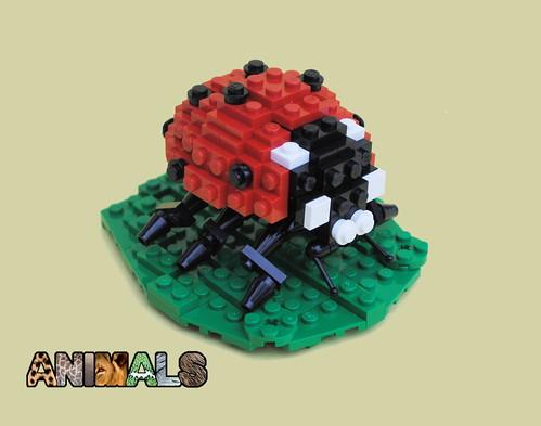 Animals: Ladybug