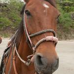 Audrey's Horse at Morgan's Rock, Nicaragua