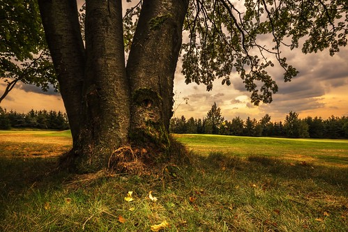 grass trunk trees tree czechia moravian sunset sunlight summer sky season scenic scenery rural plant outdoor nature magical landscape land idyllic horizon green field farm evening environment day countryside country cloudy clouds cloud beauty beautiful background agriculture