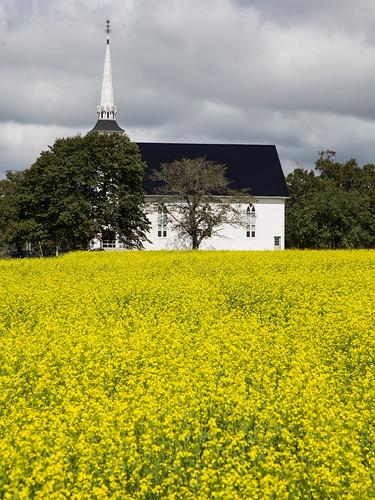 pei princeedwardisland maritimes canada canola field pastoral church