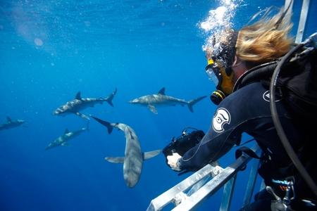 SHARK MEN 3: 301: Tagging Tigers
