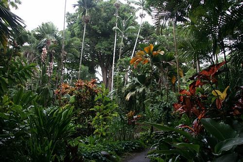 Hawaii Botanical Garden