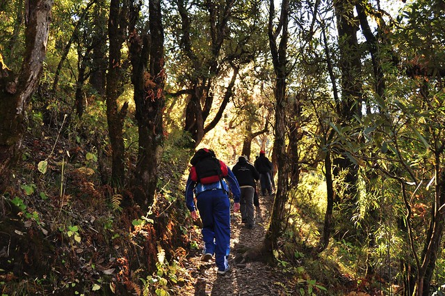indiahikes green trail