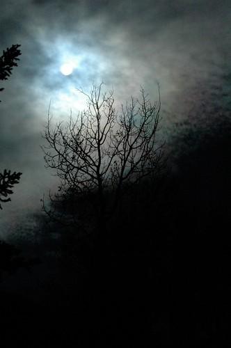 trees winter colorado basalt