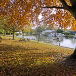 Autumn at River Green (1)