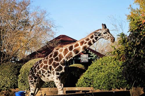 zoo fun_0004