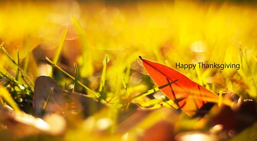 thanksgiving autumn light fall grass yellow sunrise leaf nikon bokeh explore nikon50mmf18