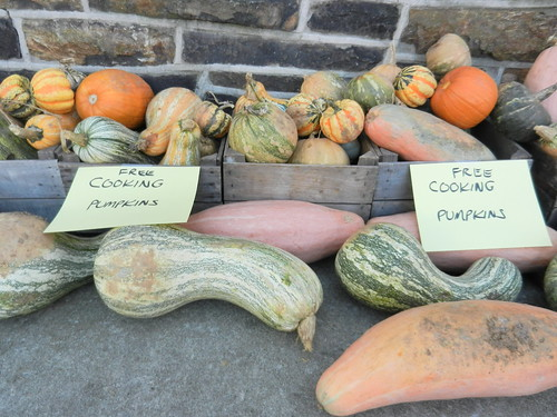 Free Pumpkins on Thanksgiving (for cooking)