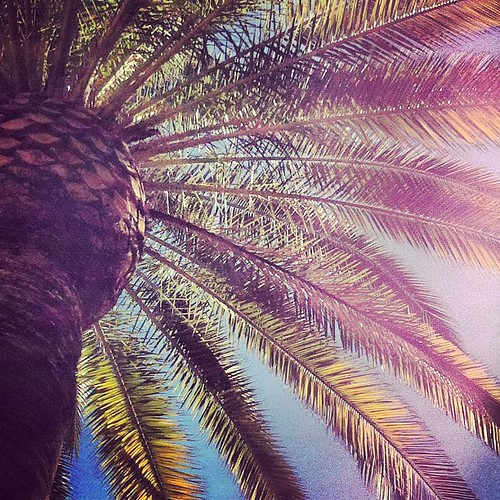 In the shade of a palm tree and I'm cool as can be...loving la vida L.A.