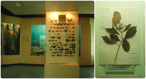 Flora and Fauna at the National Museum Quezon, Palawan Branch