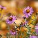 Wild Flower,-12-04886