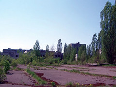 Plants and wildlife continue to fill city spaces in Pripyat.