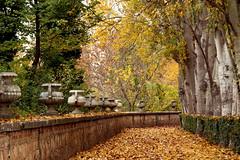 jardines de Aranjuez en otoño de 2012