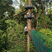 Rainforest walkway (Dani Free)