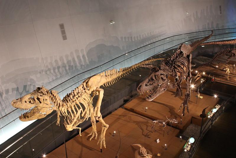 福井県立恐竜博物館 骨格模型 その6