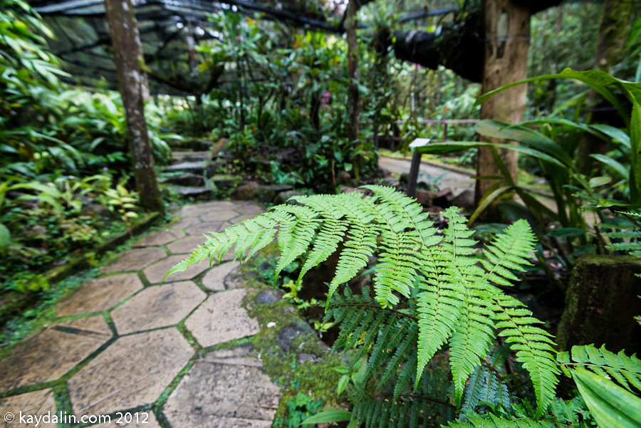 кинабалу лес фото