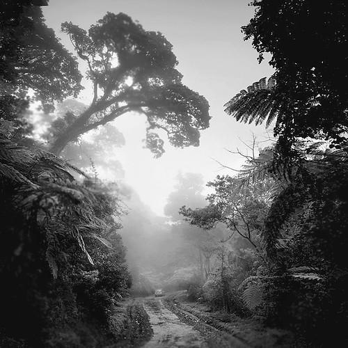 Rain Forest by Hengki Koentjoro