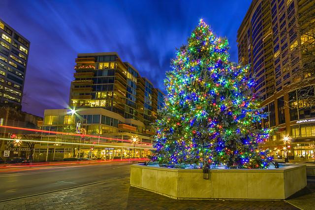 Evanston's Christmas Tree