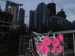 Toronto - Skylines