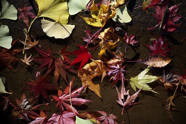 落葉 - 彩り