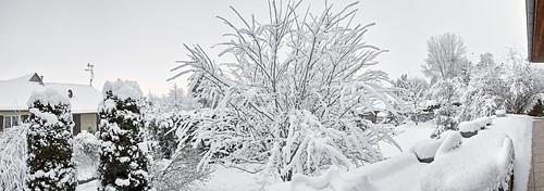 winter snow hiver sigma neige merrill foveon sigmadp1merrill