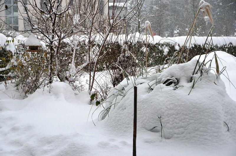 2nd snow day in garden