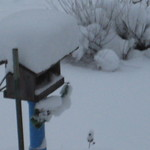 snow gauge- last nights?
