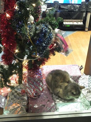 Karácsonyi macska a Karácsonyfa alatt