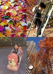 三田丘の上公園にて 2012/12/16