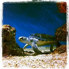 Cute sea turtles!