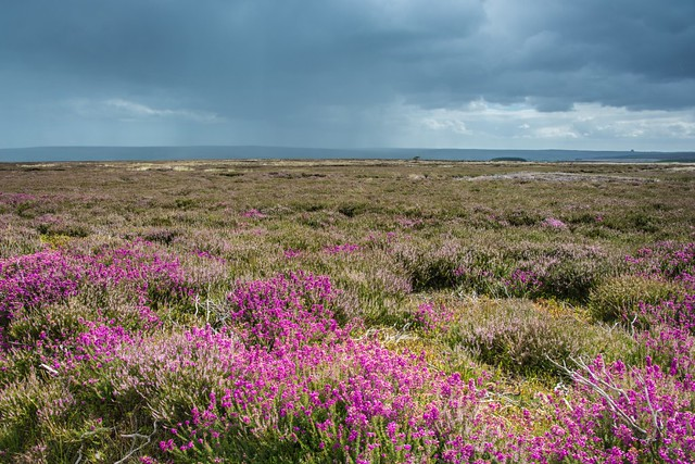 Heather and rainfall.