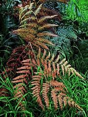 Welsh Flora