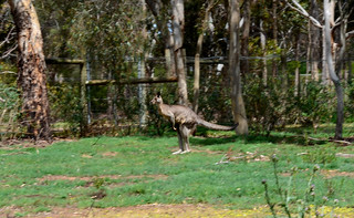 Kangaroo 07m