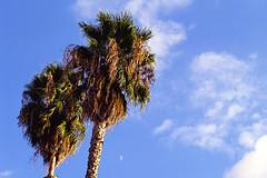 palm trees + moon